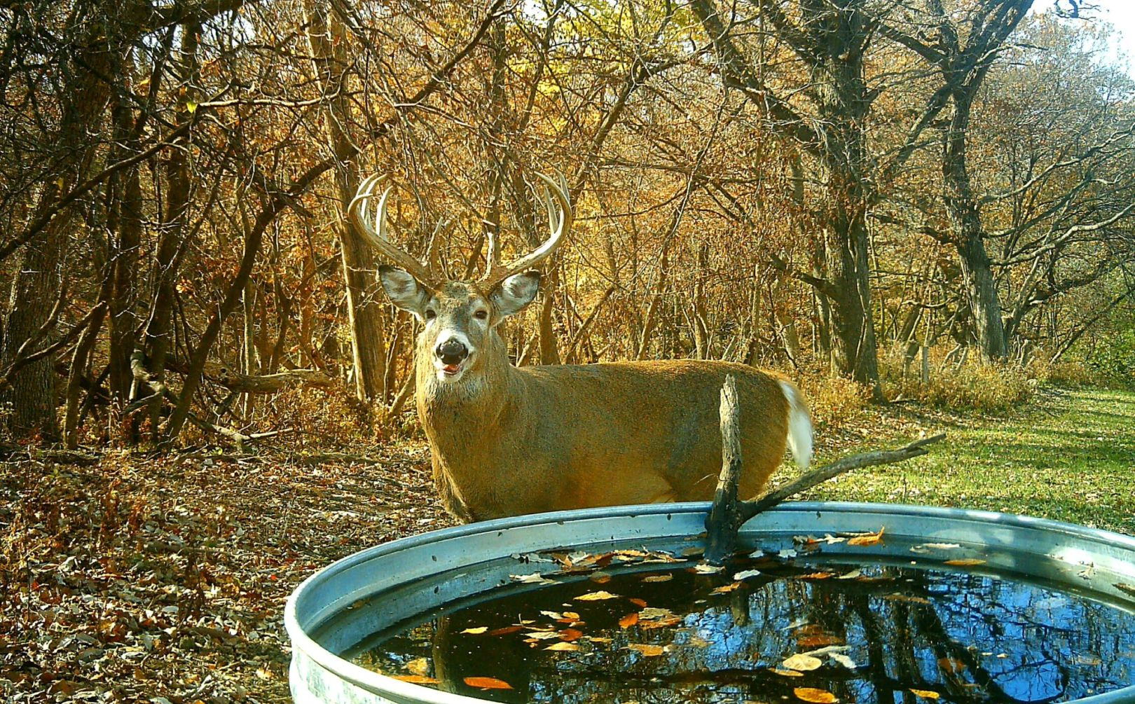 2016 Rut Forecast Weekend Timing | Whitetail Habitat Solutions with Deer Rut Predictions Illinois