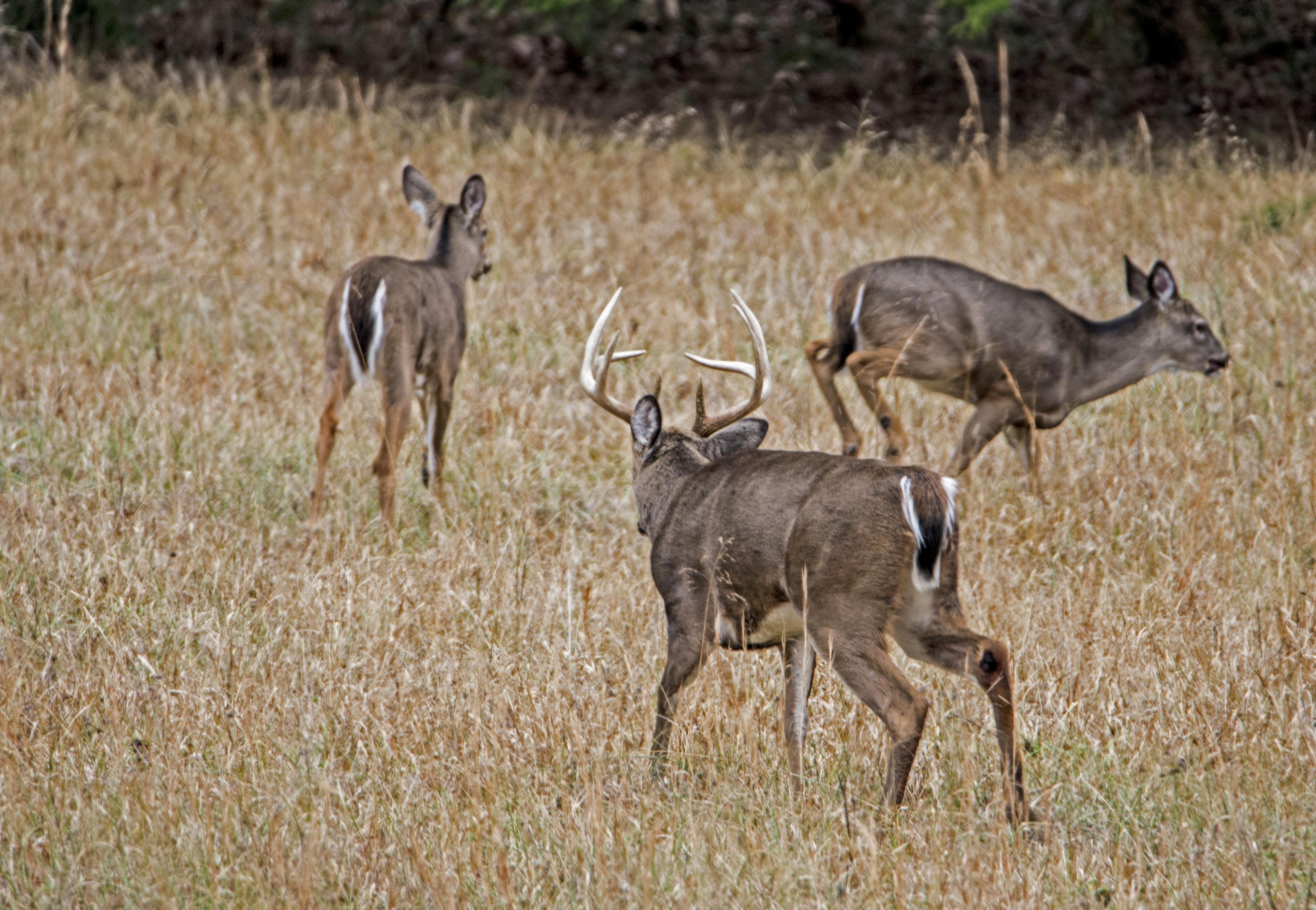 Exclusive: 2018 Peak Rut Forecast intended for Deer Rut Calendar