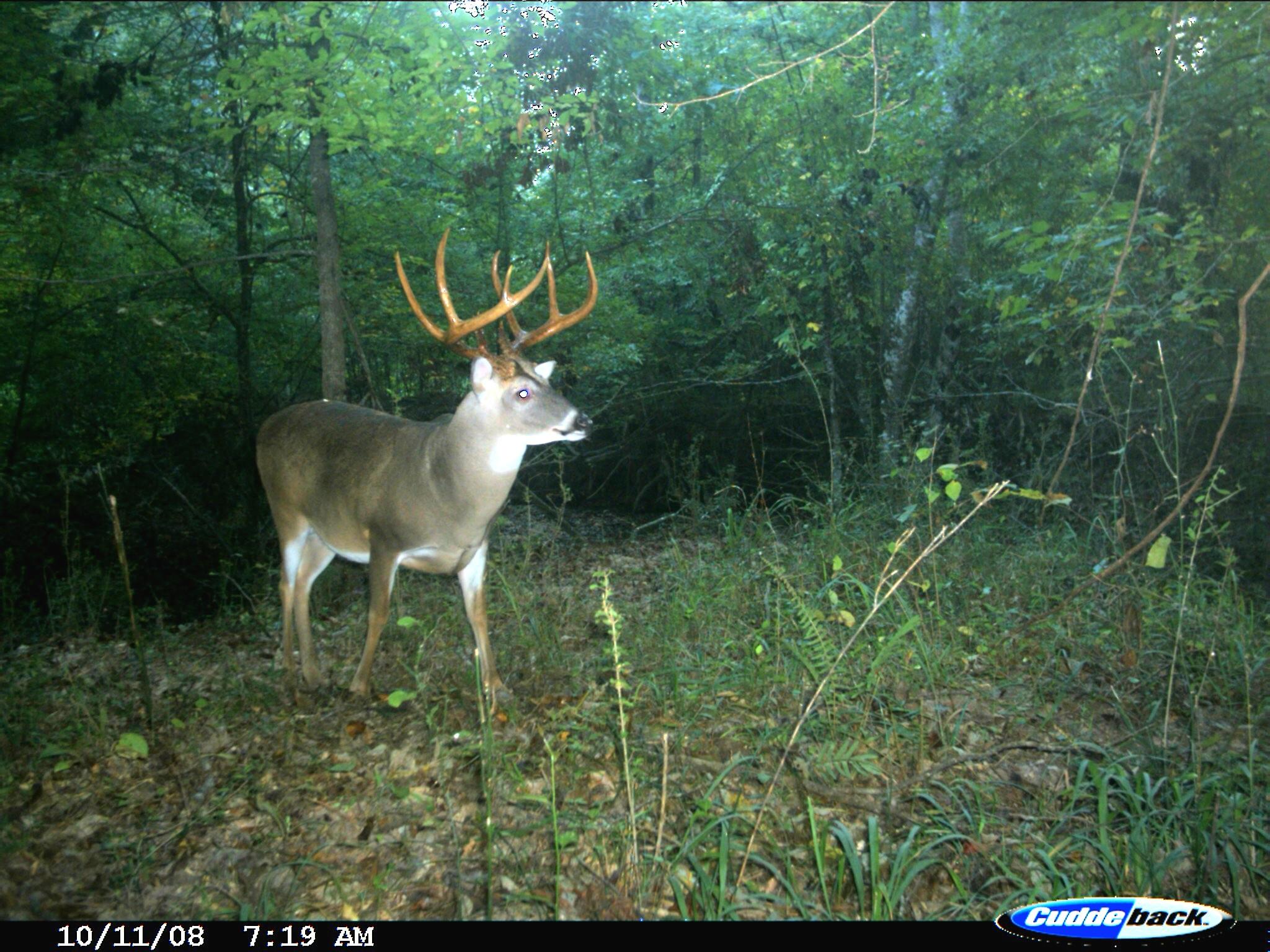 Exclusive: Peak 2016 Rut Forecast For Southern Deer Hunters - with regard to Deer Rut Calendar