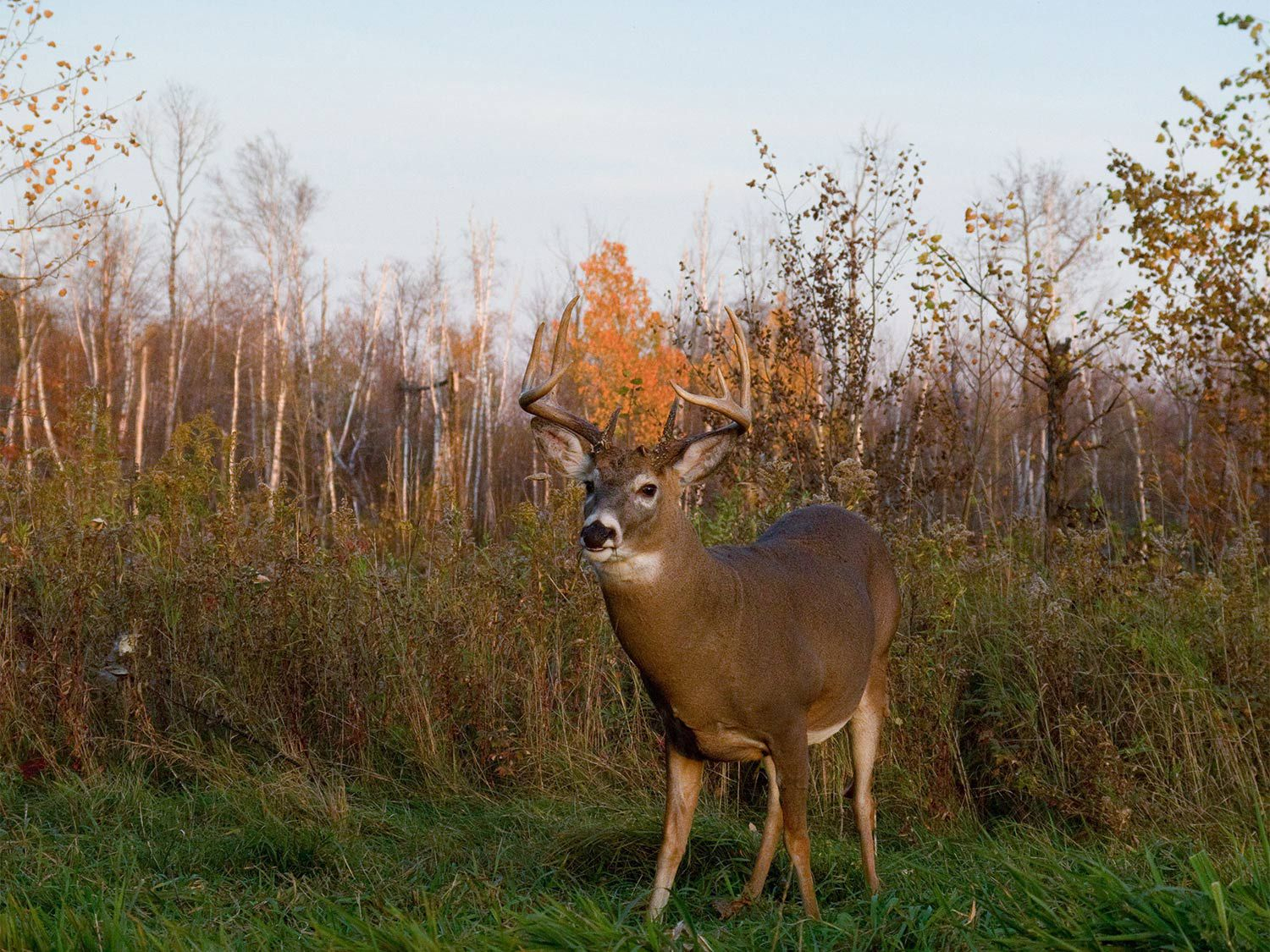 How Moon Phases Will Impact Deer Hunting During The Rut This inside 2020 Il Deer Rut Season