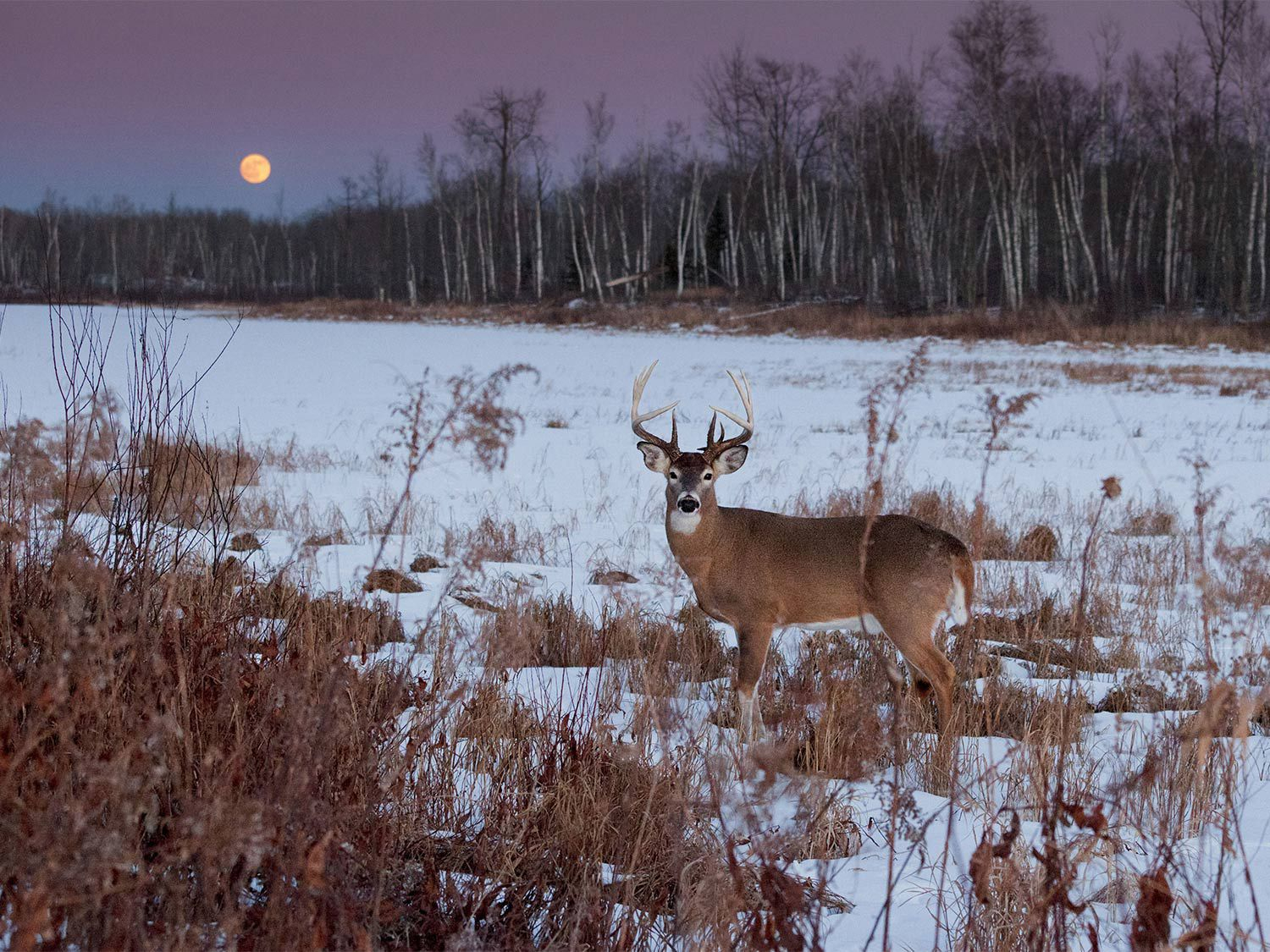 How Moon Phases Will Impact Deer Hunting During The Rut This inside 2020 Illinois Deer Rut Activity