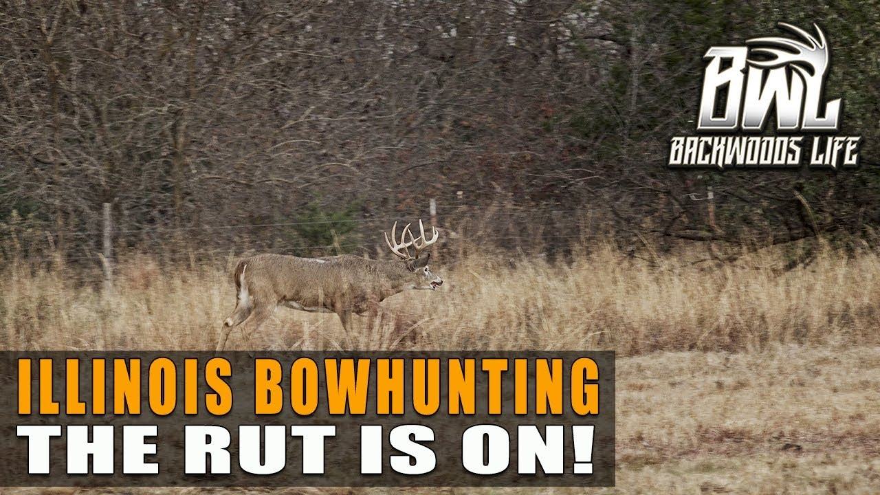 Illinois Bowhunting | The Whitetail Rut Is On! with Illinois Deer Rut