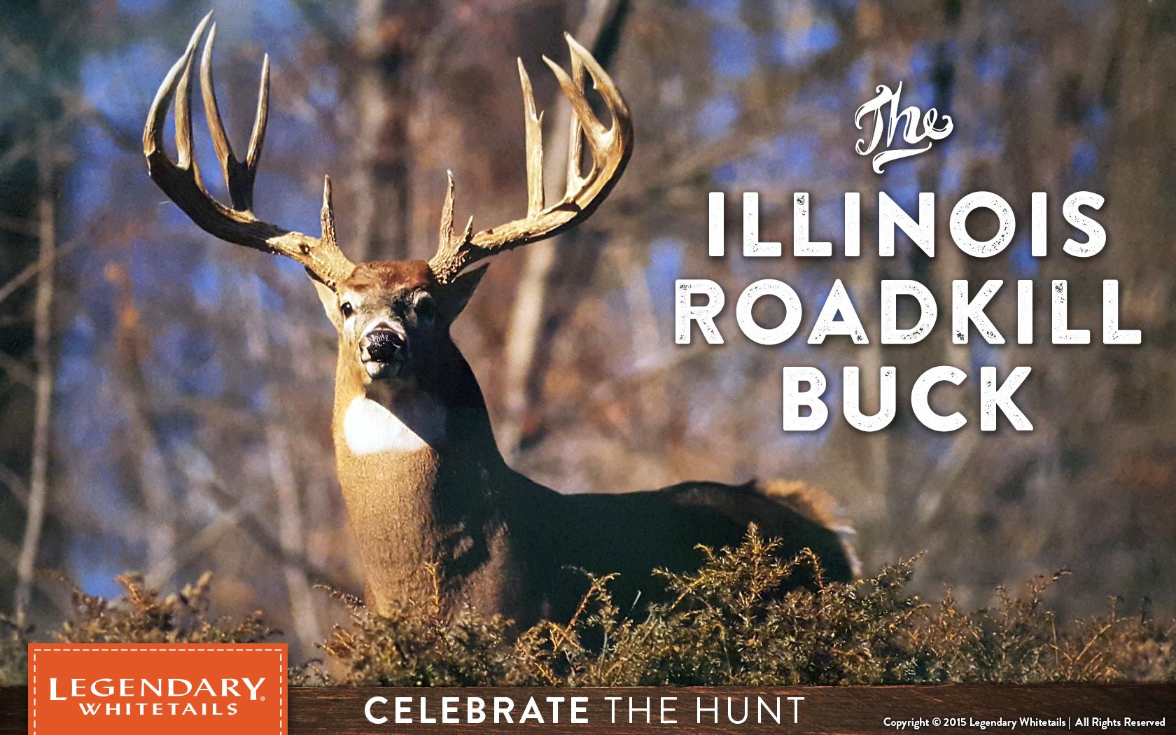 Illinois Road Kill Buck - Legendary Whitetail's Blog with Illinois Deer Rut