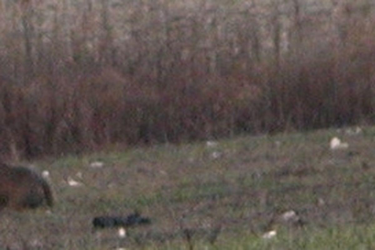 Rut Brings Archery Harvest Near Last Year: Illinois Deer for Illinois Rut 2020