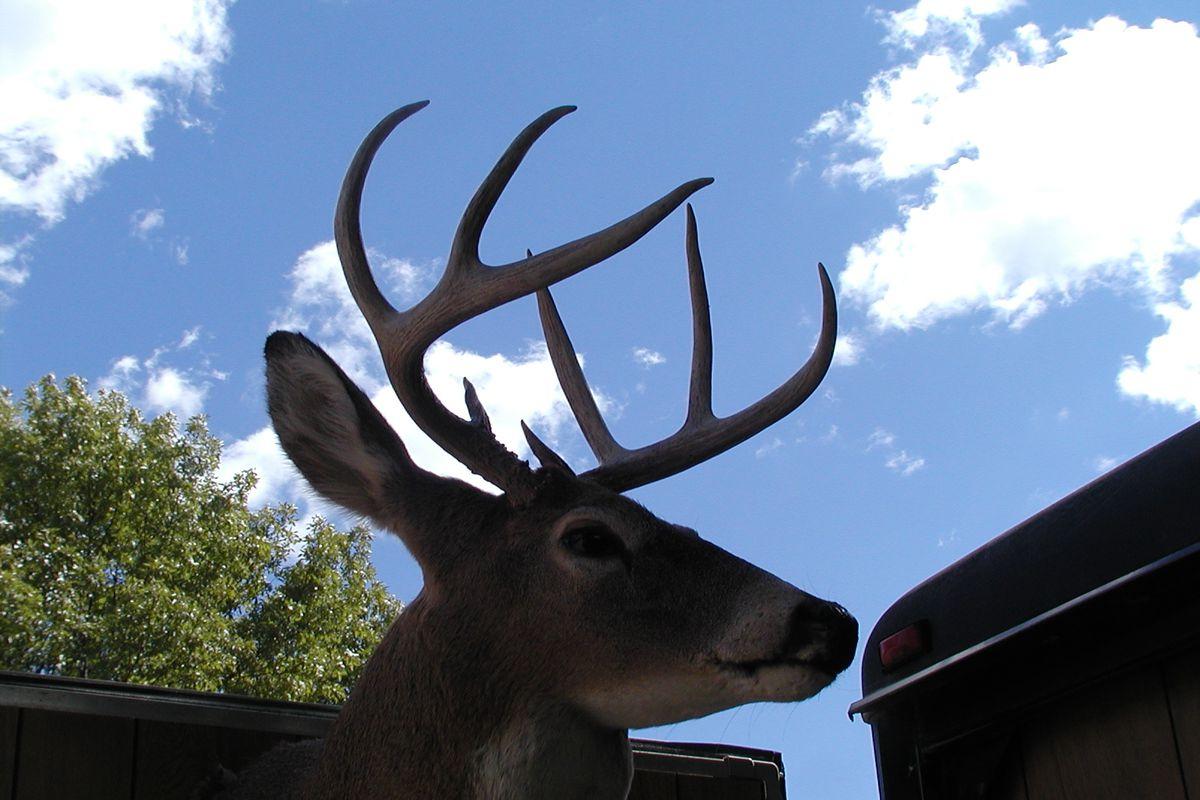Rut Signs Build As Illinois Bowhunters Stay Ahead Of 2018 regarding Illinois Deer Rut