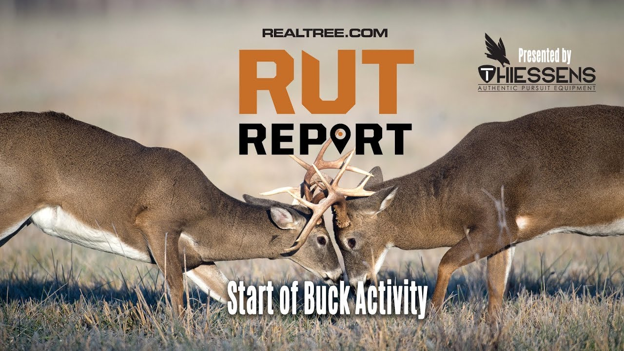 Start Of Deer Activity | Rut Report 2019 Presentedthiessens for Deer Rut Predictions Illinois