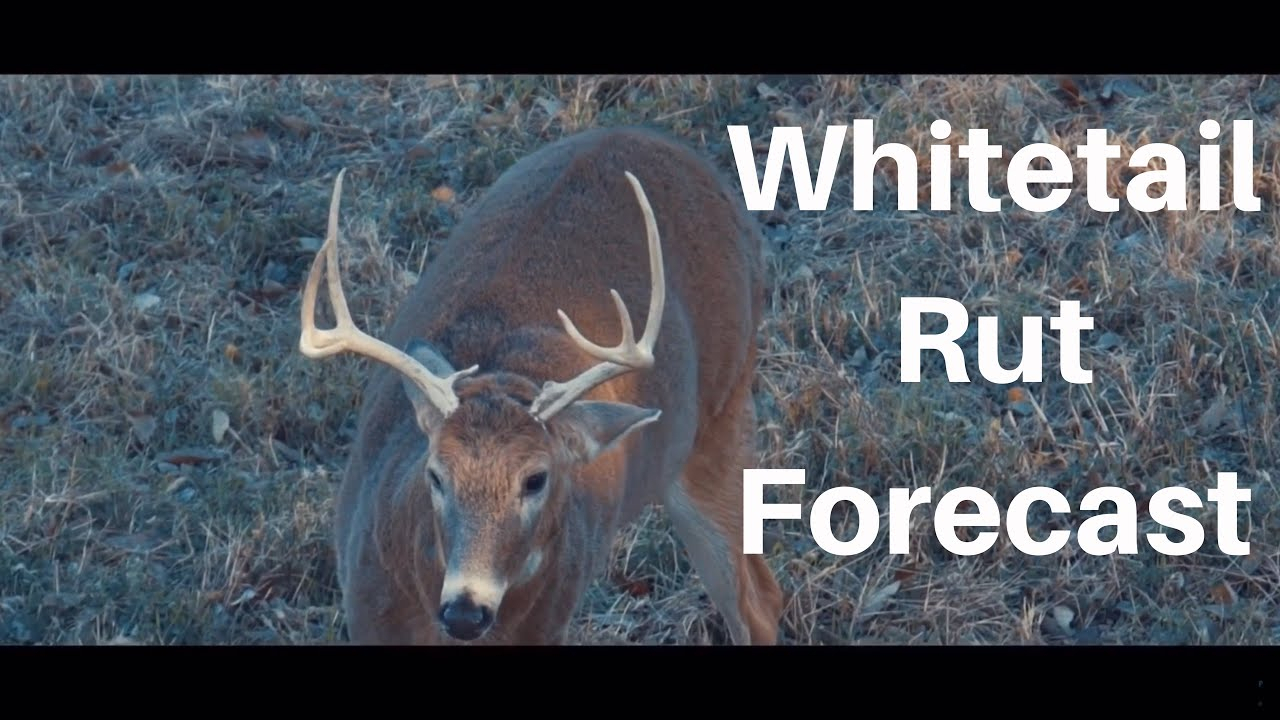 Whitetail Rut Forecast - Michigan And Illinois Hunting Prediction intended for Deer Rut Predictions Illinois