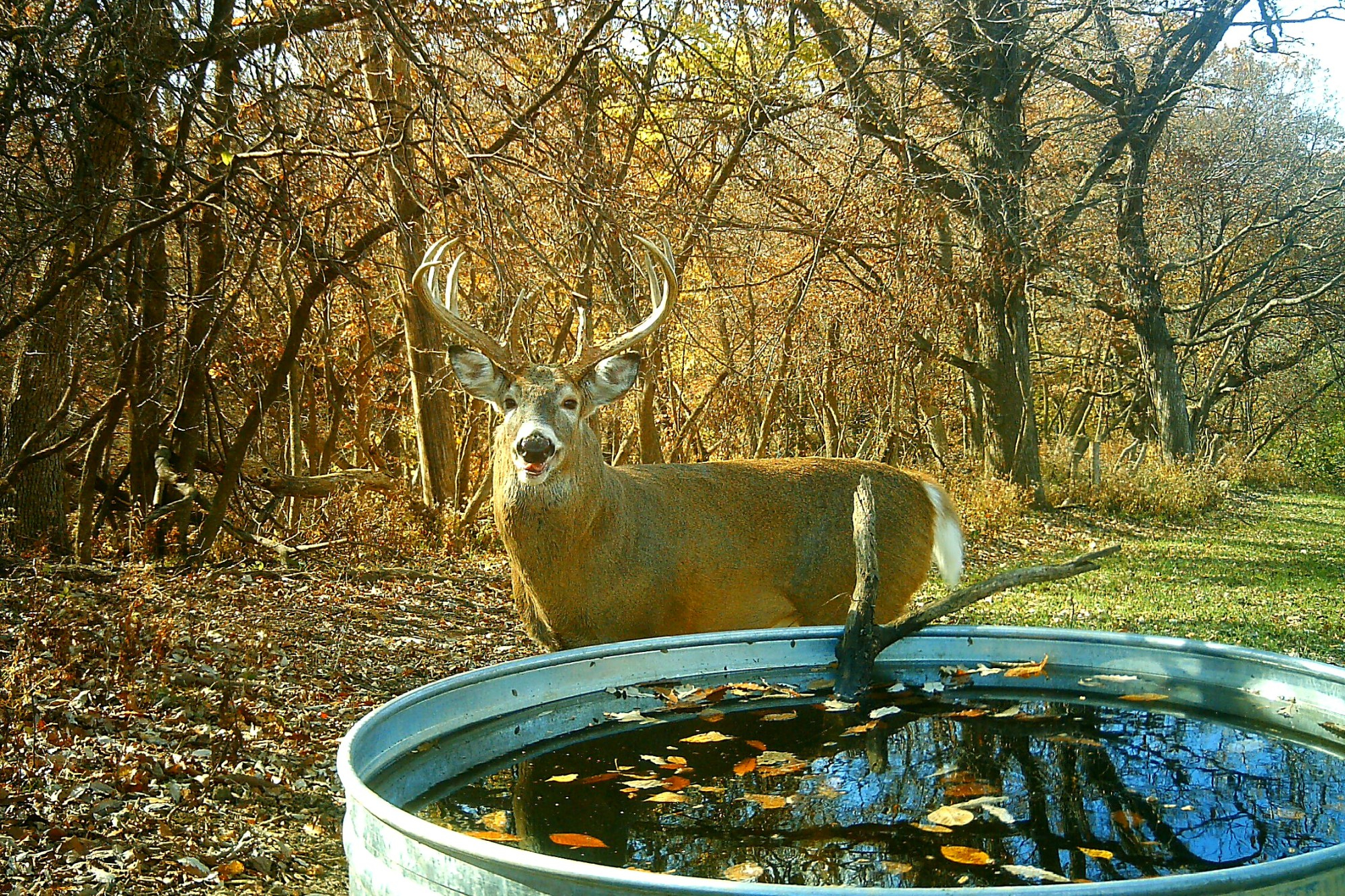 2016 Rut Forecast Weekend Timing | Whitetail Habitat Solutions intended for Indiana 2020 Whitetail Deer Rut Timing Predictions