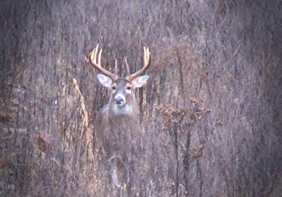 A Late Rut In 2010? – D & Dh Rut Predictions | Wired To Hunt regarding Indiana 2020 Whitetail Deer Rut Timing Predictions