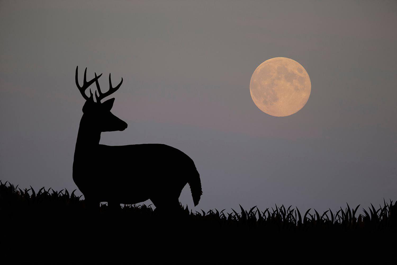 How Moon Phases Will Impact Deer Hunting During The Rut This regarding 2020 Deer Rut Calaender