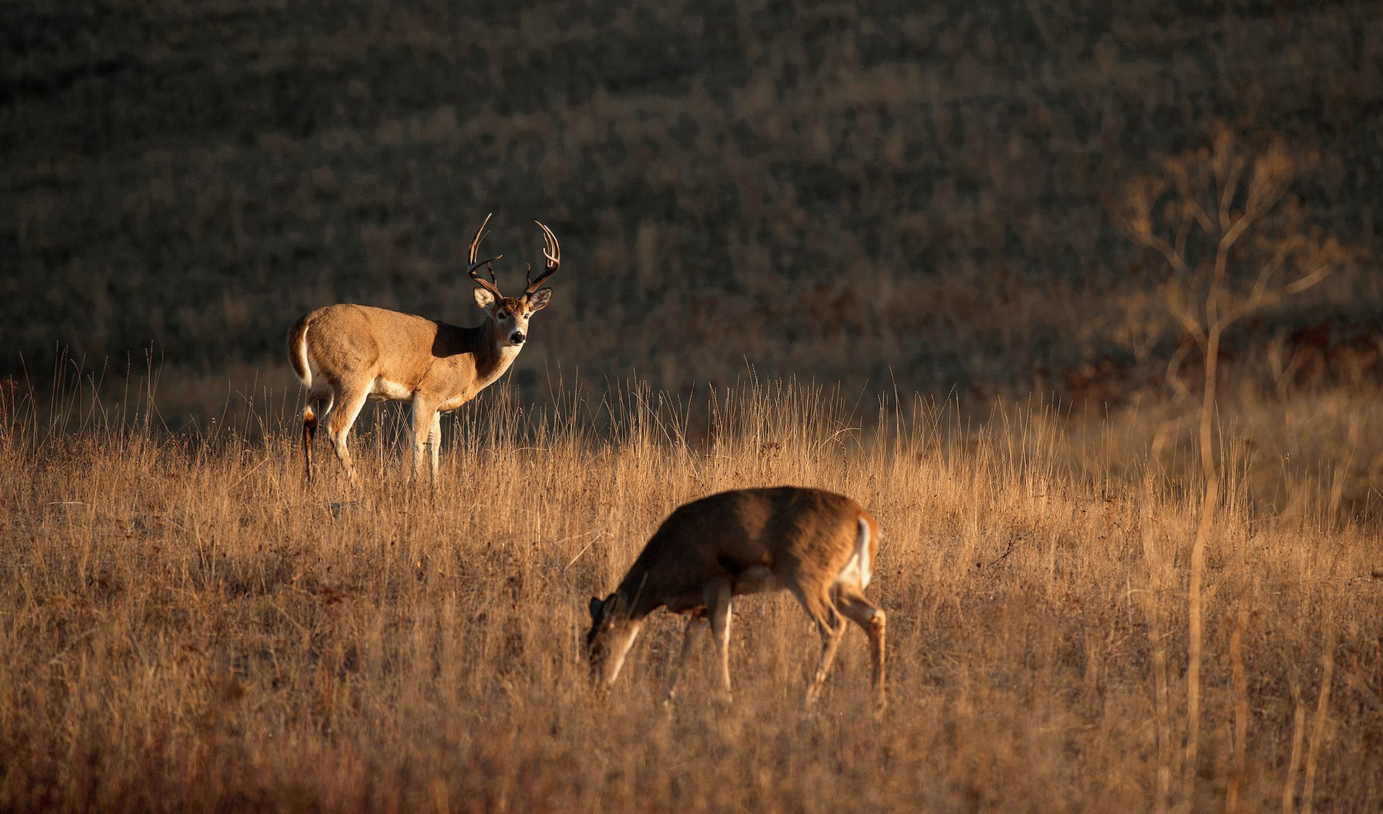 How To Hunt The Phases Of The Rut | Deer Hunting | Realtree Camo regarding 2020 Wny Whitetail Deer Rut