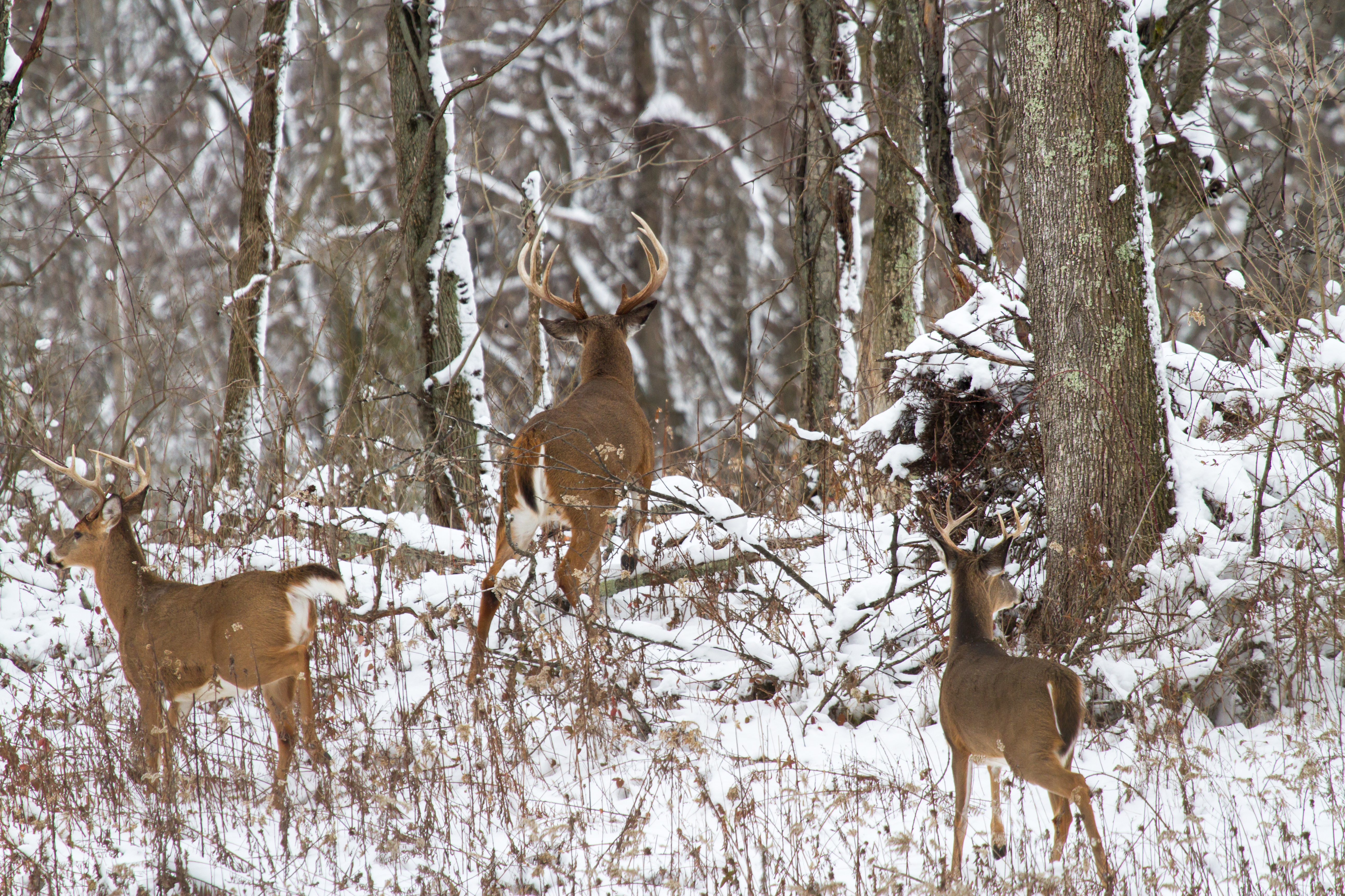 Oh Deer! Let's Rut - Metro Parks - Central Ohio Park System pertaining to 2020 Whitetail Rut Callendar In Ohio