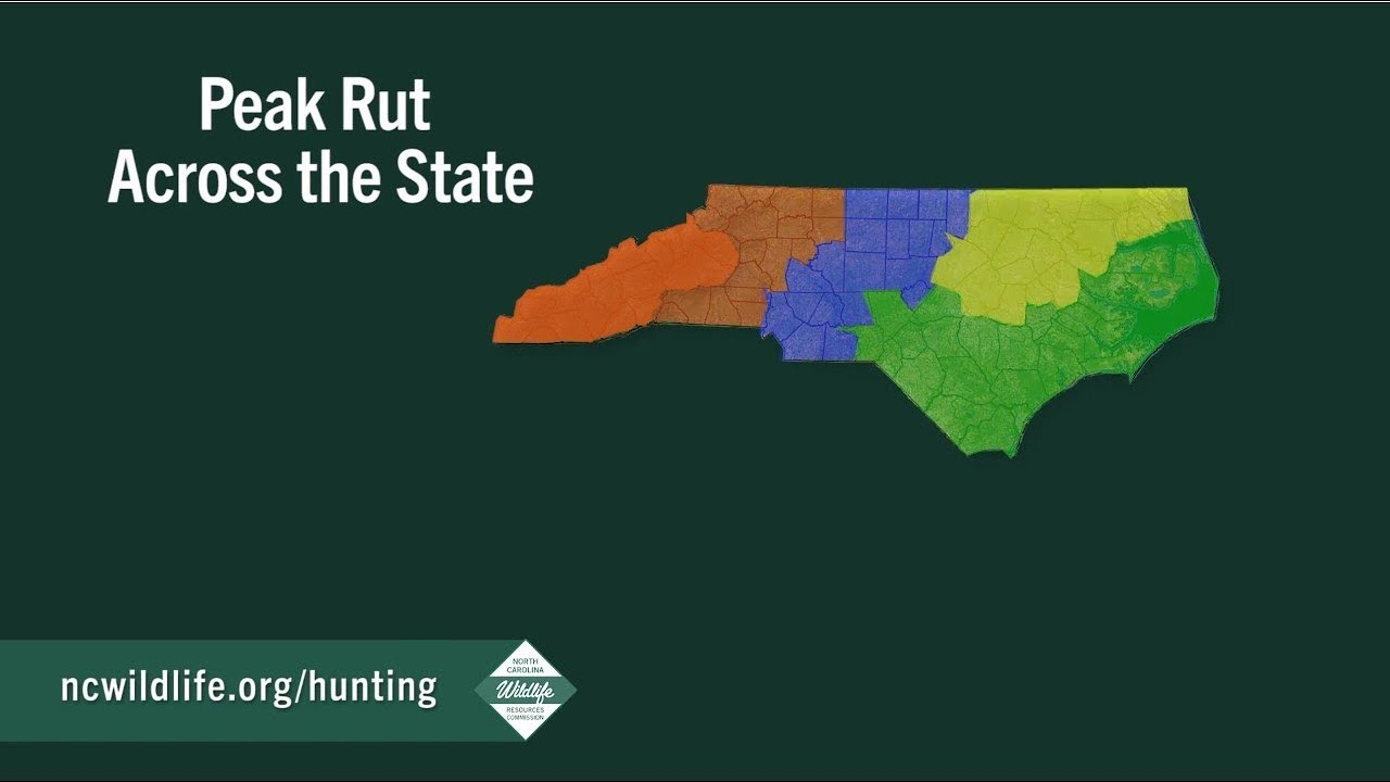 Peak Of The Rut Across North Carolina throughout 2020 Rut Prediction