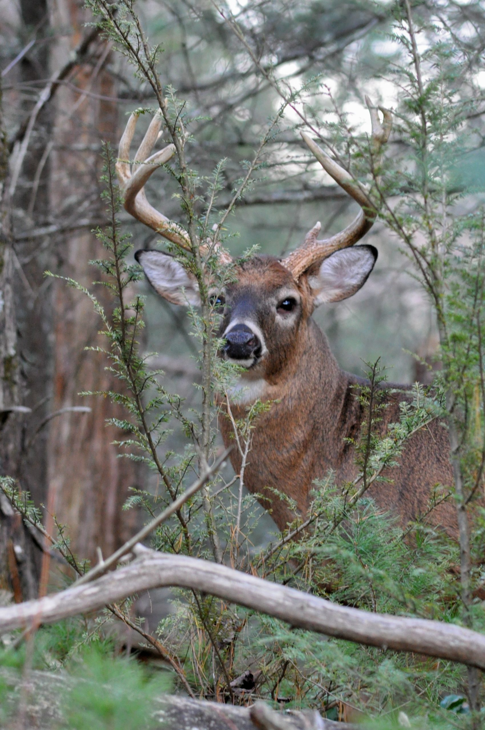 Small Tracts Of Land With The Right Features Can Be Tough To pertaining to When Is The Rut In North Carolina 2020