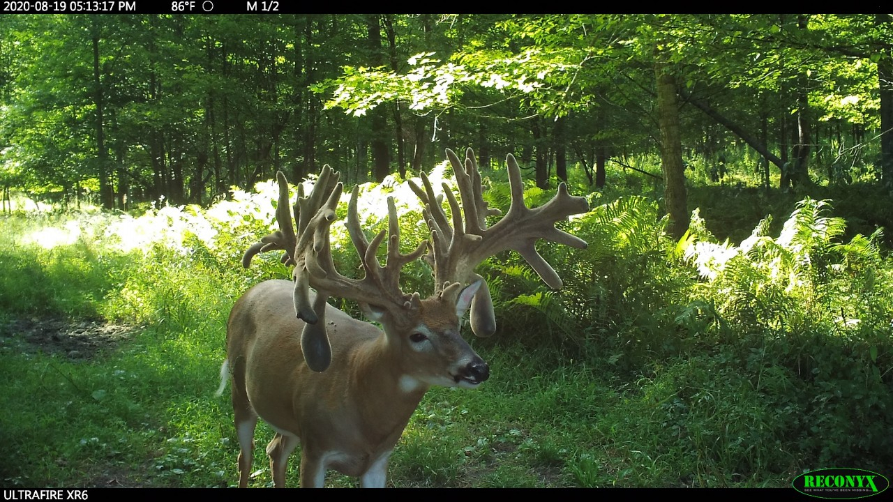 Still Time To Book Your 2020 Rut Hunt   Trail Cam Pics with regard to 2020 Whitetail Rut