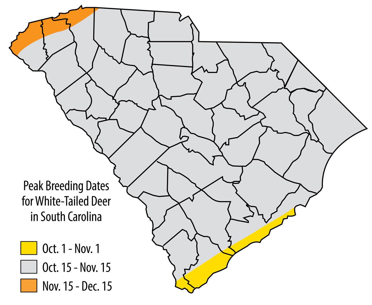 When Does South Carolina's Deer Herd Hit The Peak Rut? in Peak Rut Predictions For 2020