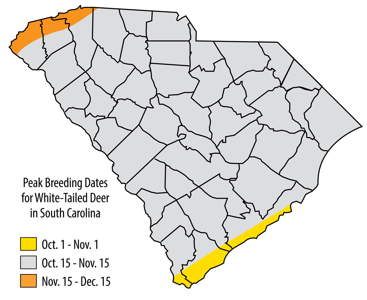 When Does South Carolina's Deer Herd Hit The Peak Rut? throughout When Is The Rut In North Carolina 2020