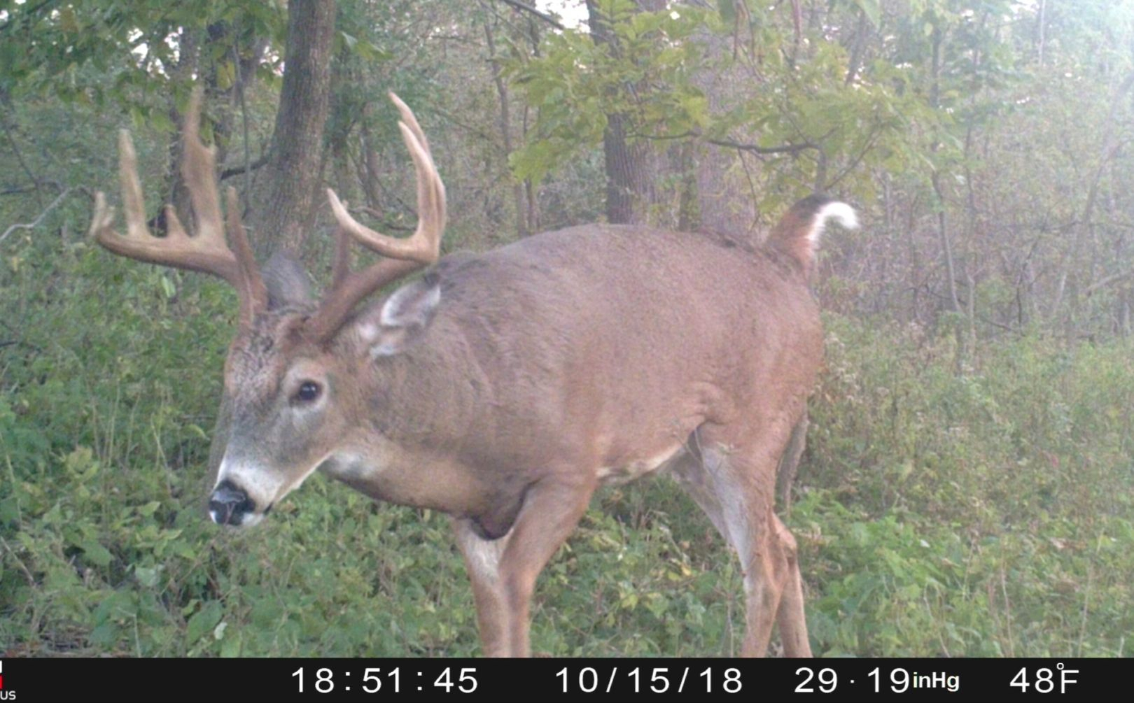 When Will The Whitetail Rut Begin | Whitetail Habitat Solutions inside Indiana 2020 Whitetail Deer Rut Timing Predictions