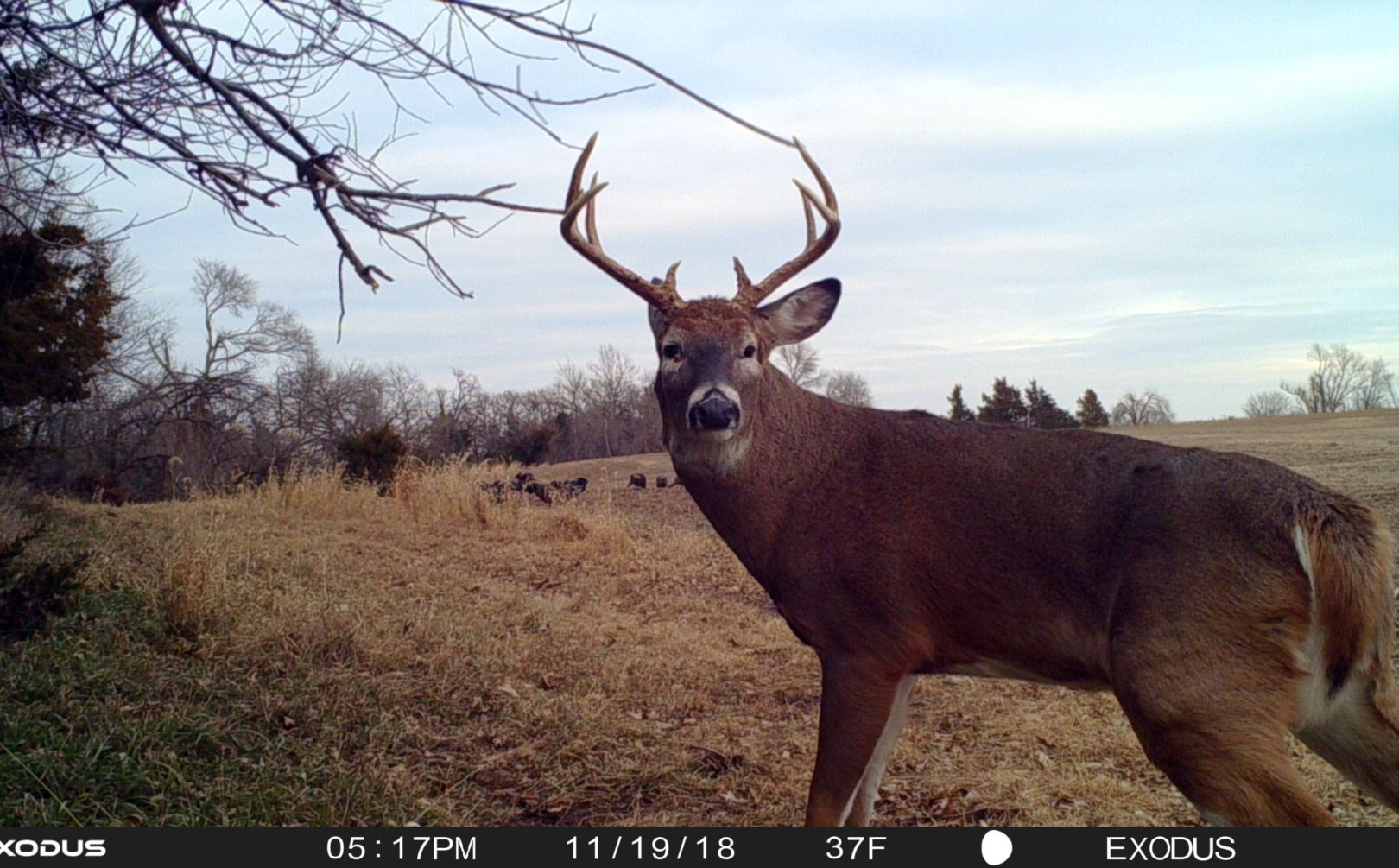 Where Does A Buck Bed? Top 10 Spots | Whitetail Habitat with Indiana 2020 Whitetail Deer Rut Timing Predictions