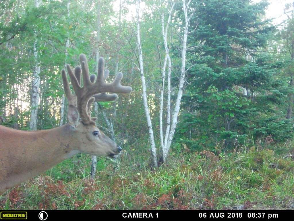 Whitetail Deer Hunting In Rut, 2020 throughout 2020 Deer Rut Calaender