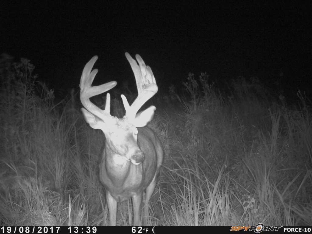 Whitetail Deer Hunting In Rut, 2020 with regard to 2020 Whitetail Rut
