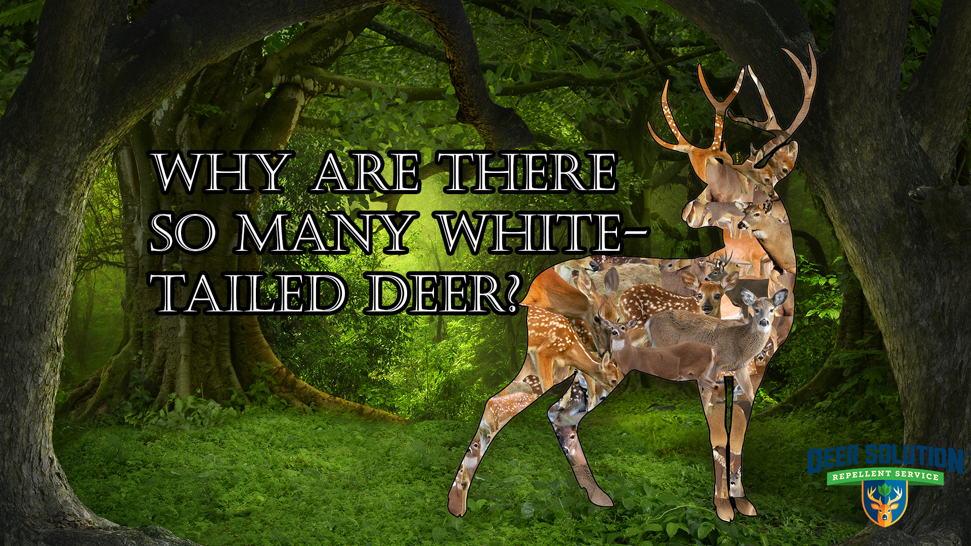 Why Are There So Many White-Tailed Deer? - Deer Solution throughout 2020 Wny Whitetail Deer Rut