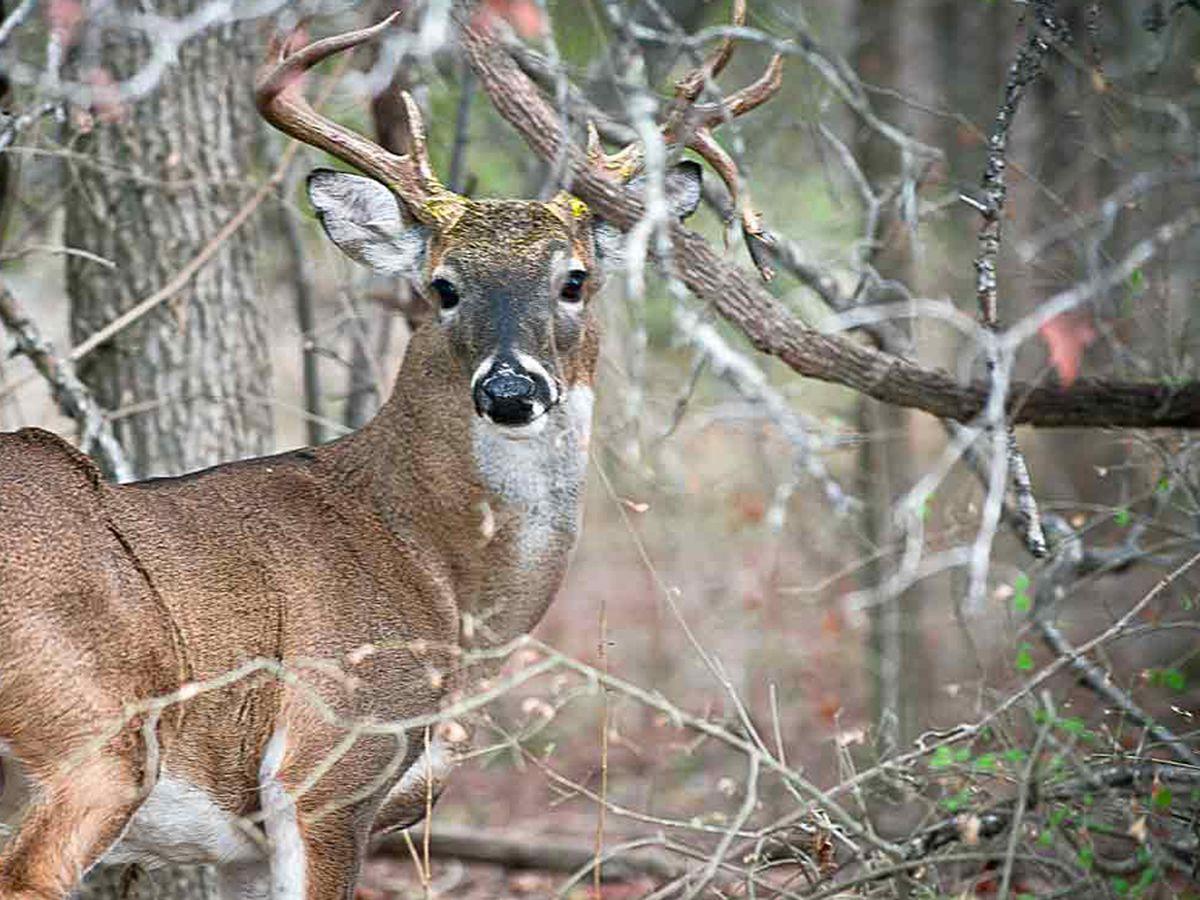 Winner Of Texas Deer-Hunting Contest Stripped Of Title with Deer Hunting Calendar 2020
