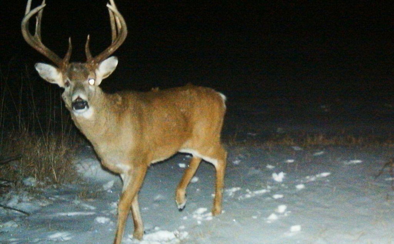 2015 Rut Prediction: Weekend Rut Timing | Whitetail Habitat regarding Deer Rut Schedule