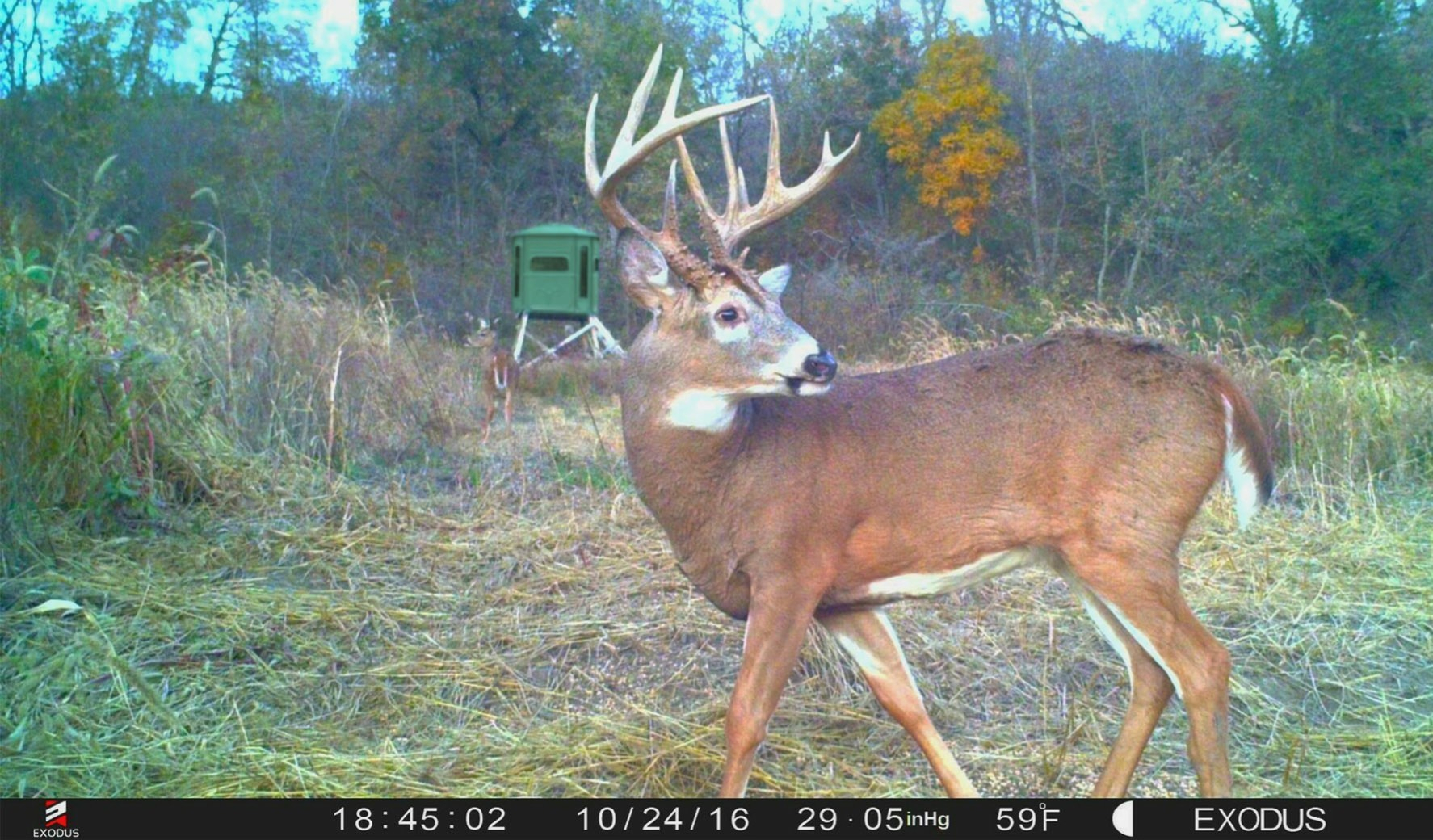 2017 Whitetail Rut Forecast | Whitetail Habitat Solutions regarding Whitetail Deer Rut Calendar