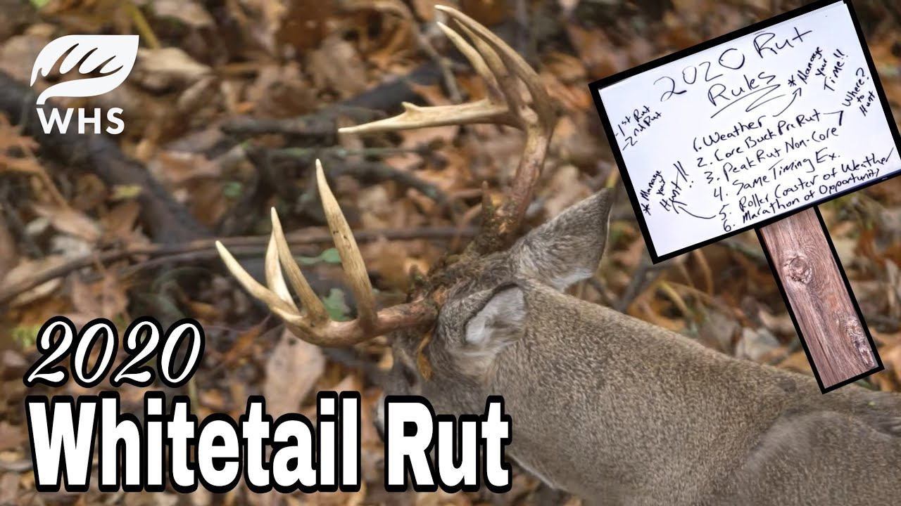 2020 Whitetail Rut Forecast | Rut Rules for Prediction Of Deer Rut 2021 In Ontario