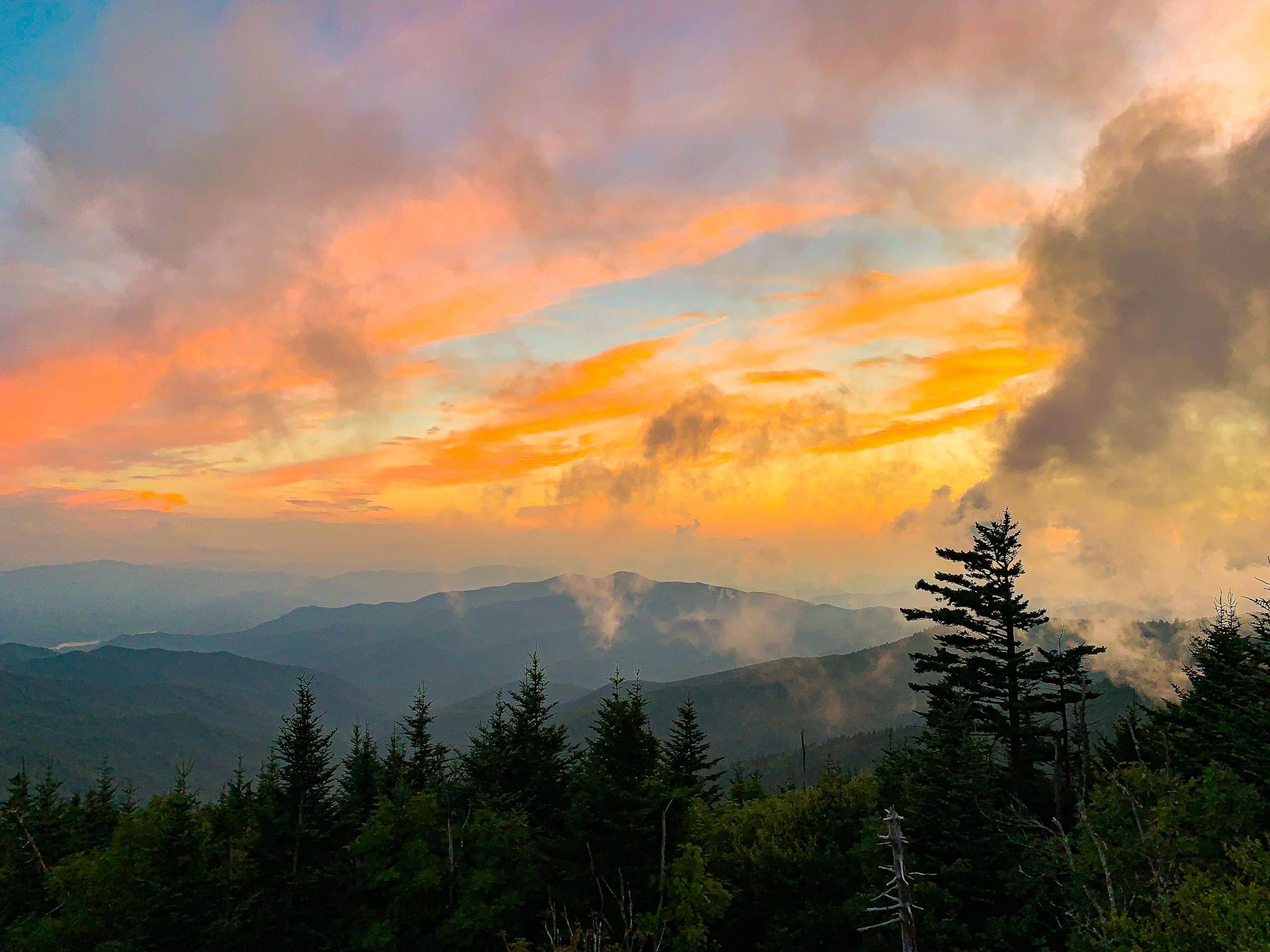 2021 Calendar Winners Announced - Tennessee Wildlife Federation intended for Rut Calendar 2021