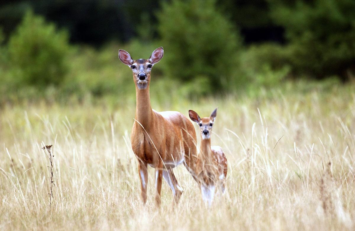 2021 Deer Hunting Rules Open For Comment - Michigan regarding Michigan Deer Season 2021