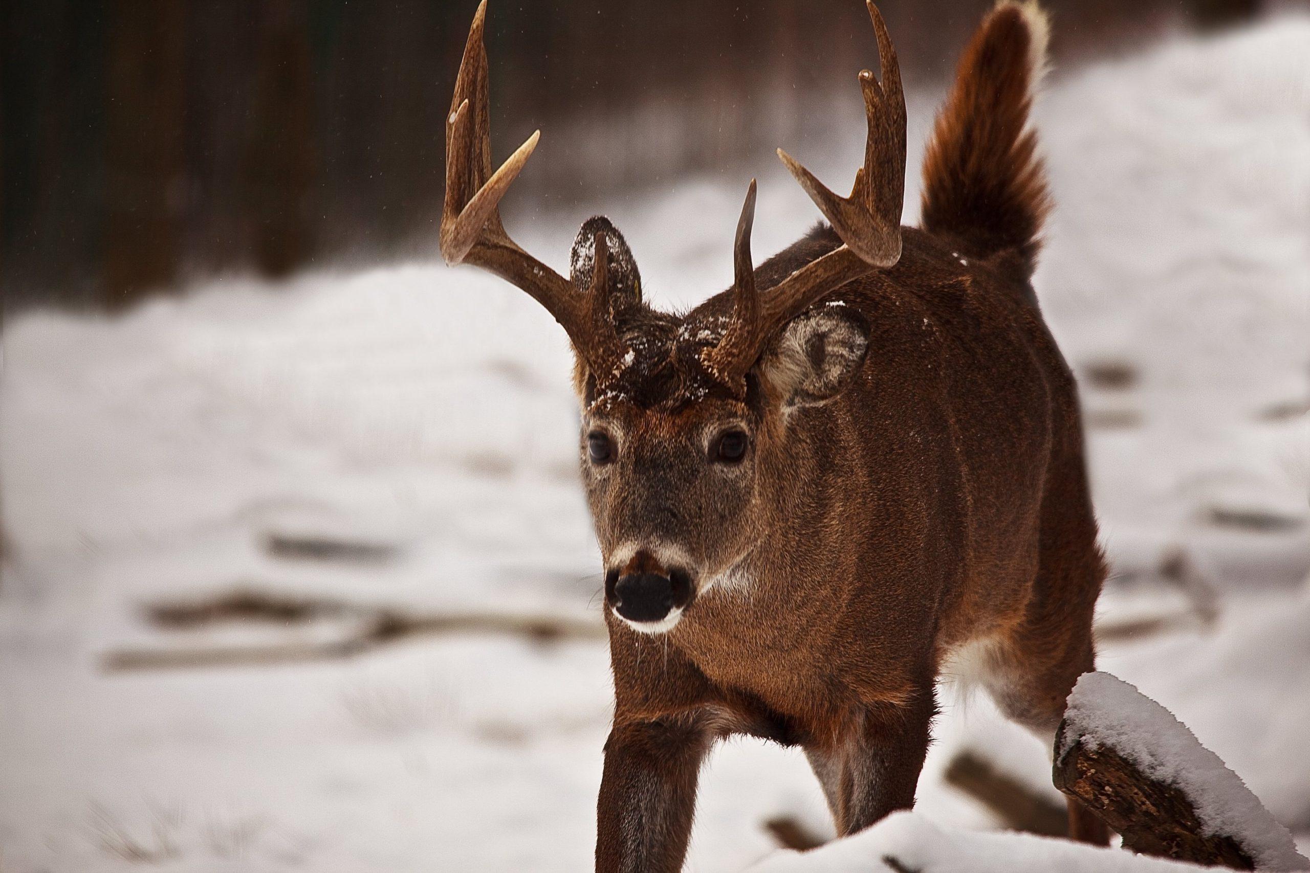 2021 Deer Regulations Appear At November Nrc Meeting regarding Michigan Deer Season 2021