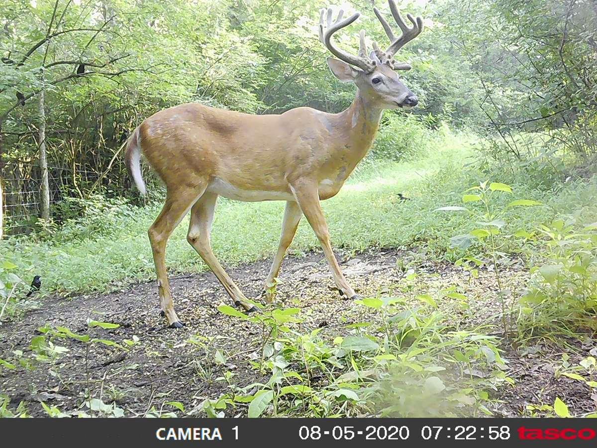 2021 Ky Archery Pre Rut - Main Lodge for Kentucky Rut 2021
