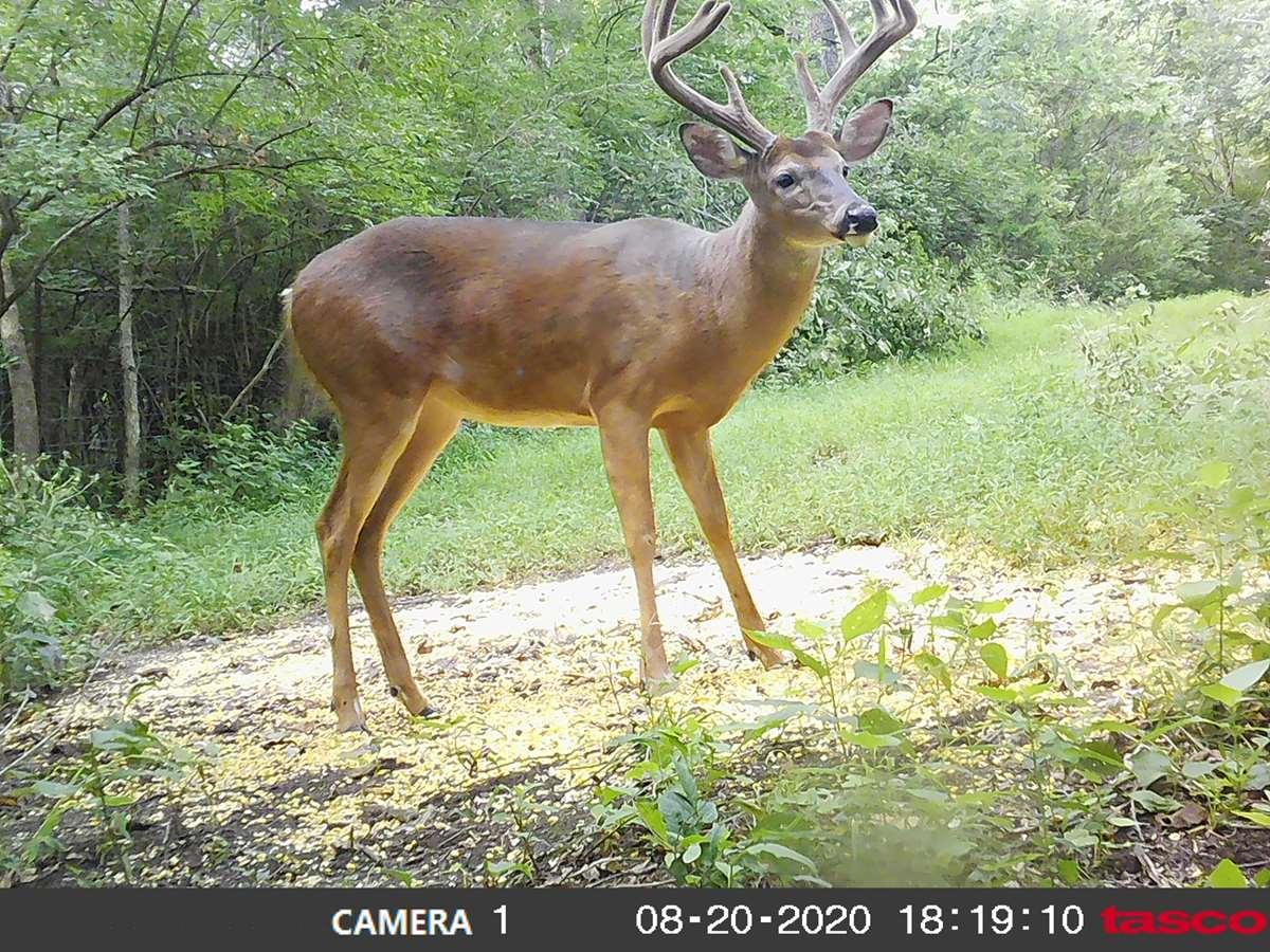 2021 Ky Archery Pre Rut - Main Lodge inside Deer Season Ky 2021