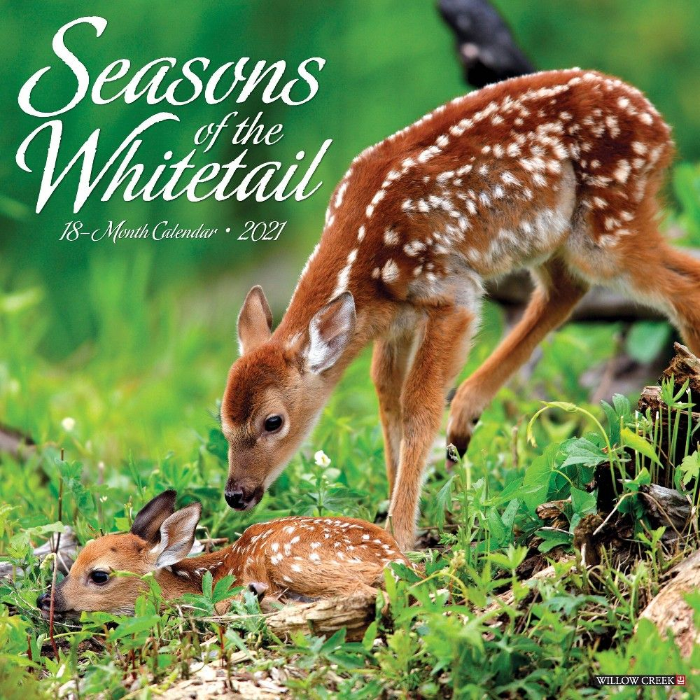 2021 Monthly Wall Calendar Seasons Of The Whitetail - Willow in Hunting Season: Calendar 2021 Monthly
