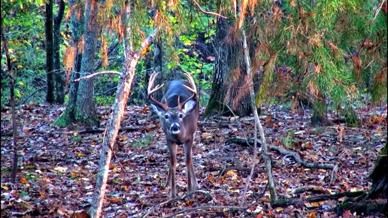 Alabama Deer Hunt During The Rut for Alabama Deer Rut