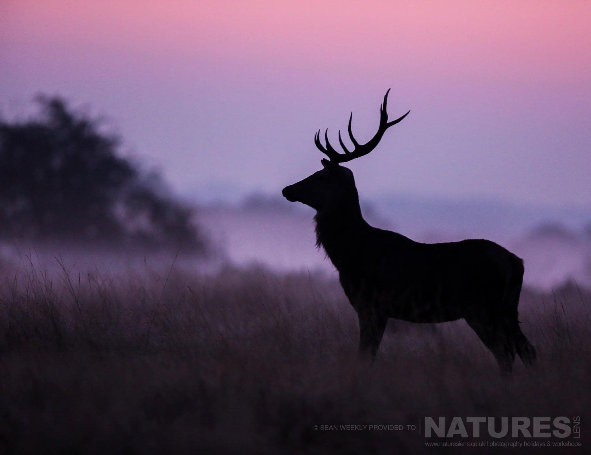 Announcing Our Red Deer In Rut Photography Workshop for Deer Rut Westleton 2021