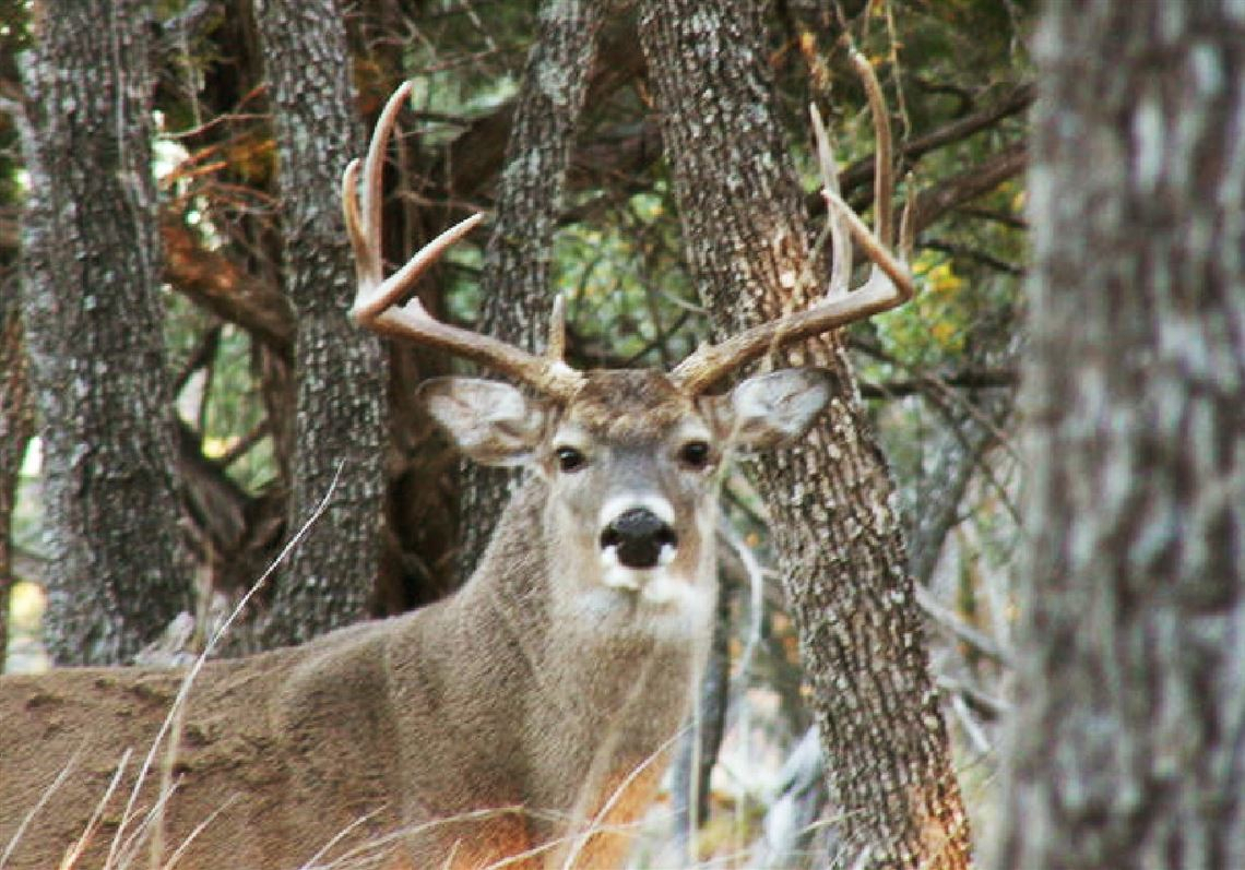 Be Prepared For All Conditions On Opening Weekend regarding 2021 Pa Rut Predictions