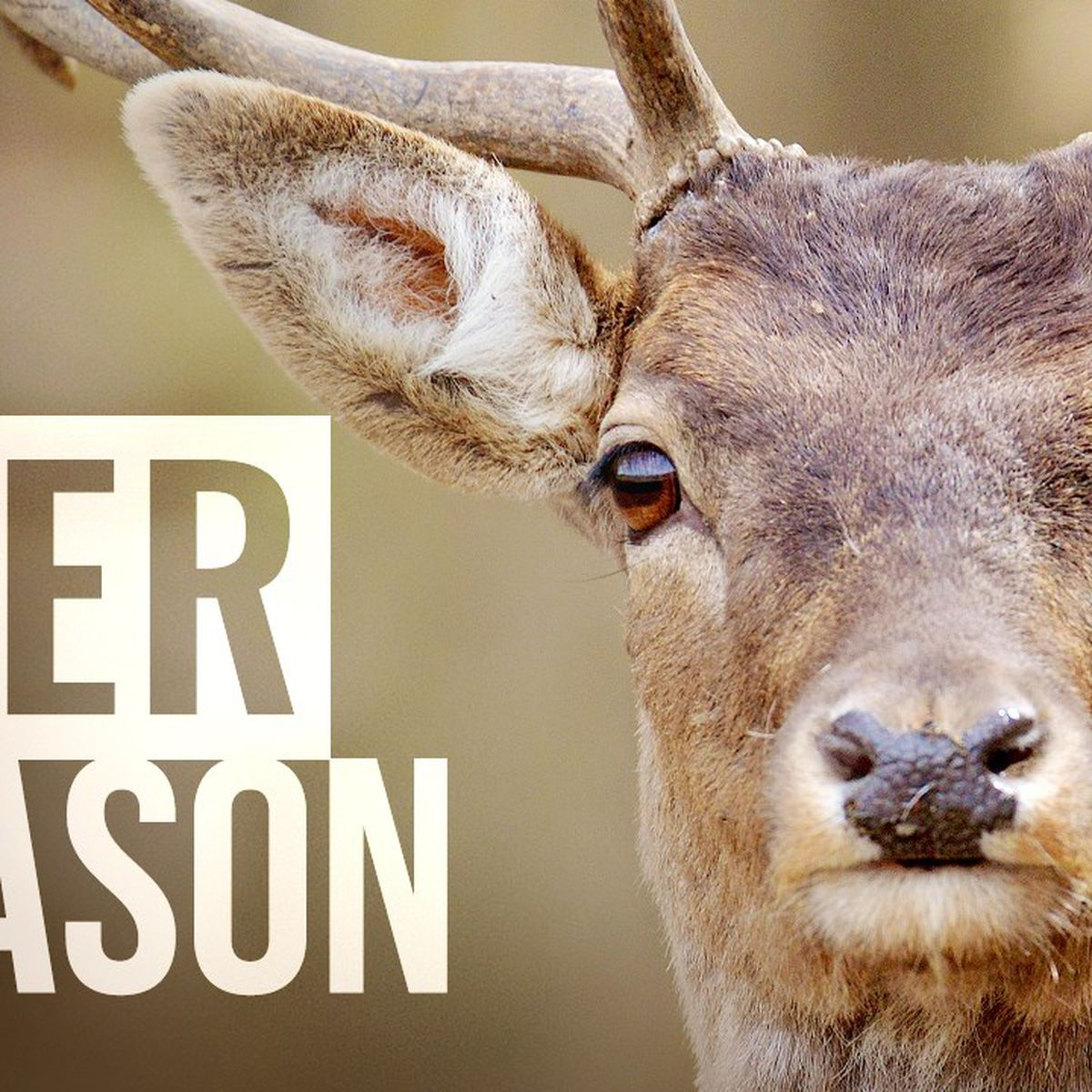 Bill Would Extend Michigan'S Firearm Deer Season10 Days regarding Michigan Deer Season 2021