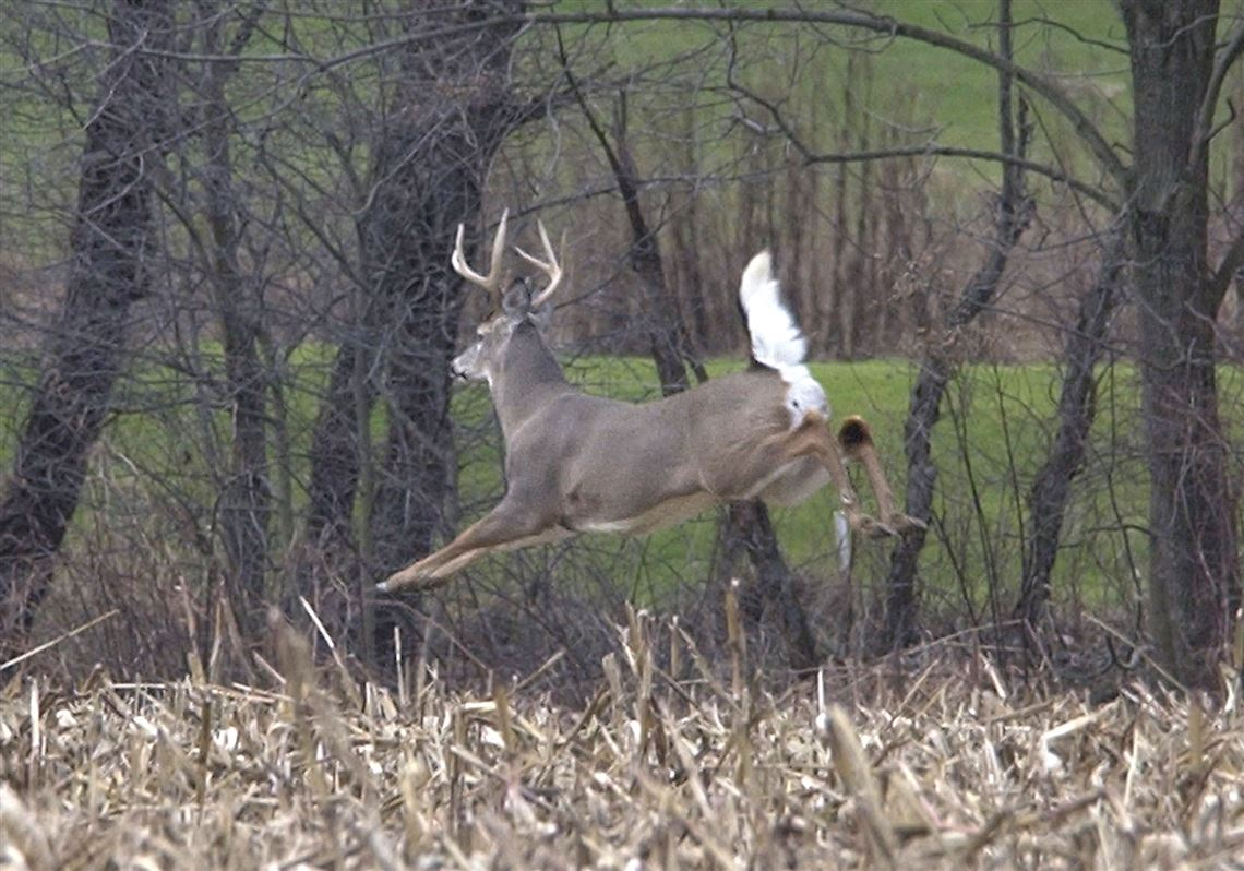 Blade Hunting Report: Wrap That Venison For Ideal Flavor for Michigan Deer Season 2021
