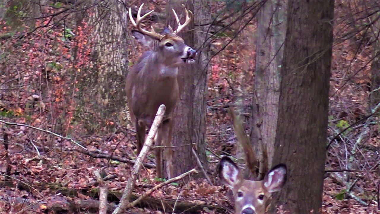 Bucks Chasing Right Under Me!! - Pa Archery Rut Hunt with Pa Deer Rut