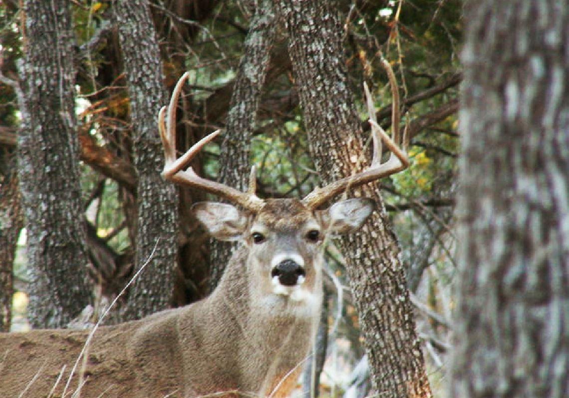 Camp Culture Adapting To The Saturday Opening Of Deer Season for Pa Deer Season 2021