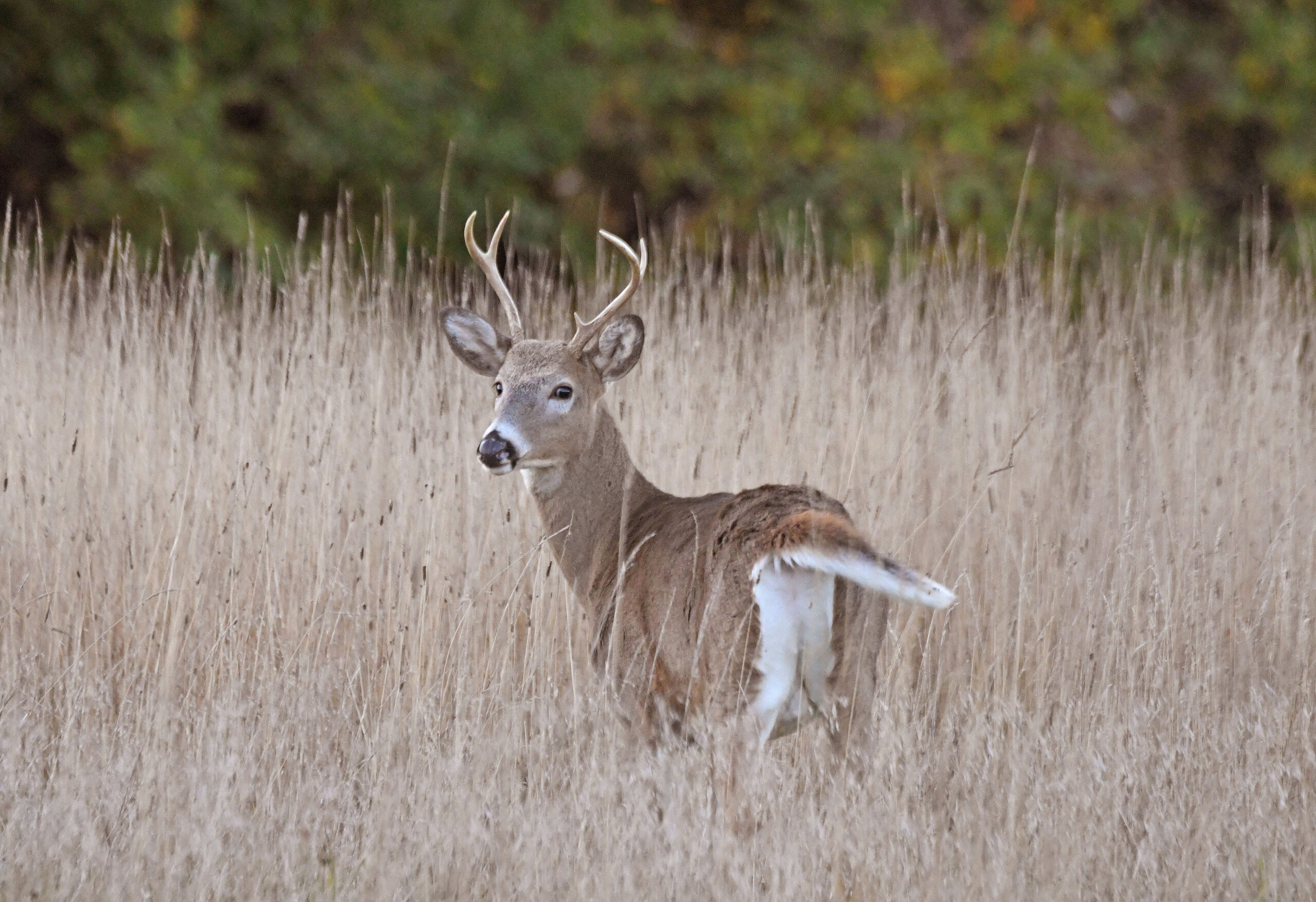 Deer Hunters Head Out For Archery Season pertaining to Ohio Whitetail Rut 2021