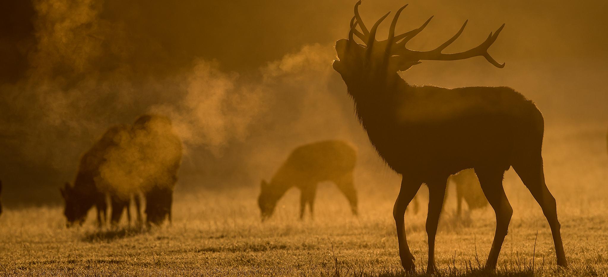 Deer - Natures Images inside 2021 Deer Rut