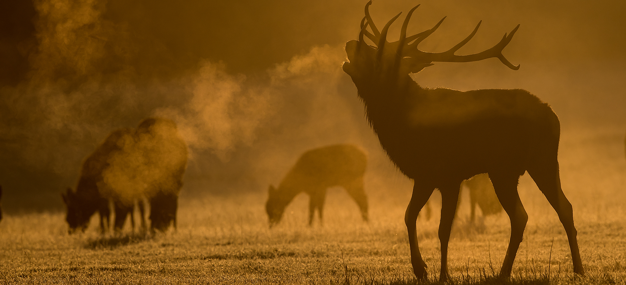 Deer - Natures Images regarding Bradgate Deer Rut 2021