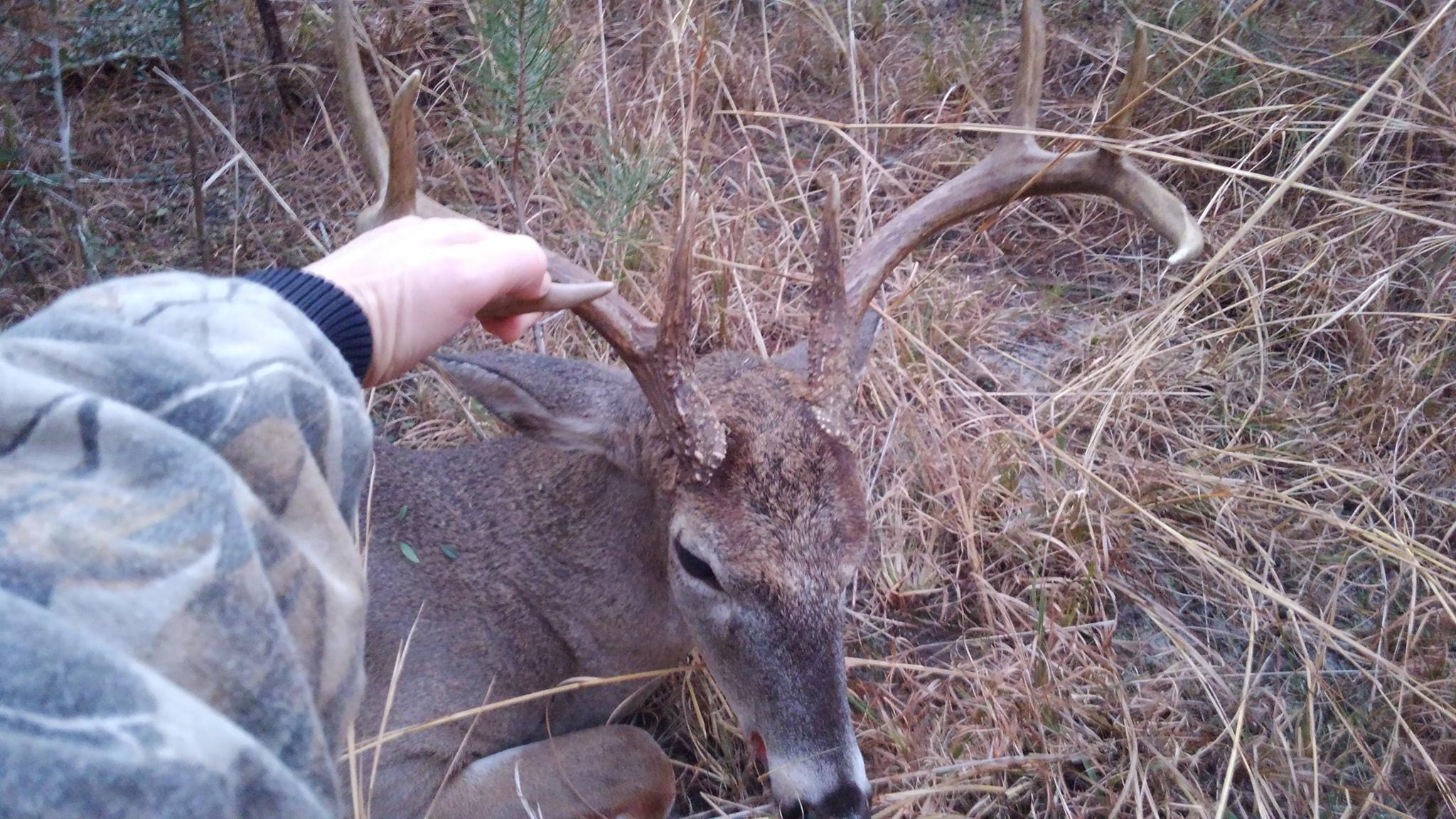 Deer Rut In Northwest Florida | Panhandle Outdoors with Deer Rut Schedule