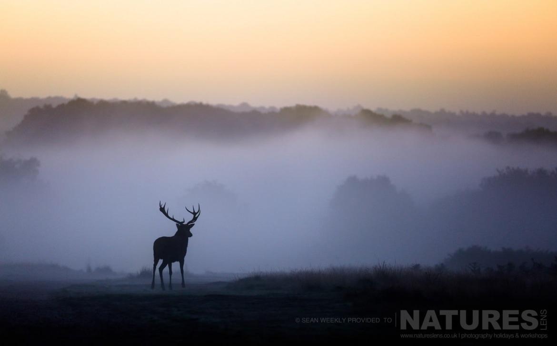 Deer Rut – Natureslens regarding Deer Rut Westleton 2021