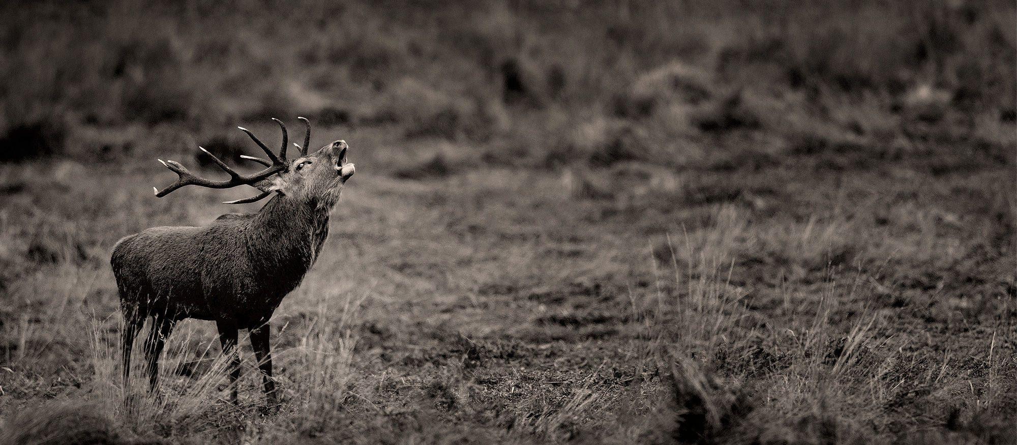 Deer Rut Photography Workshop - Tesni Ward Photography with Bradgate Deer Rut 2021