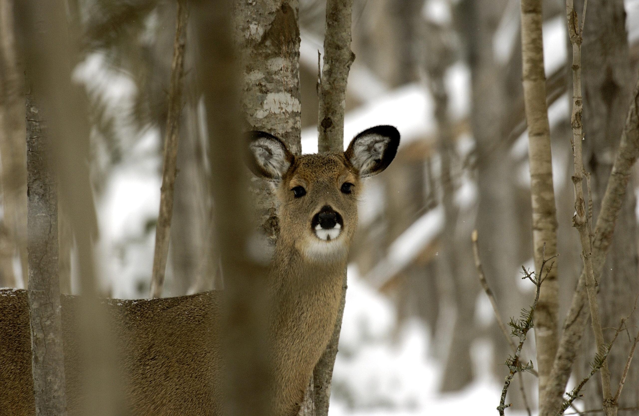 Dnr Offering Discount On Deer Licenses For Hunting In 6 inside Michigan Deer Season 2021